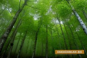 Обявиха конкурс за лого на Седмицата на гората