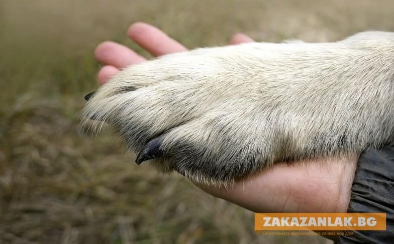 Помощ за бездомните животни