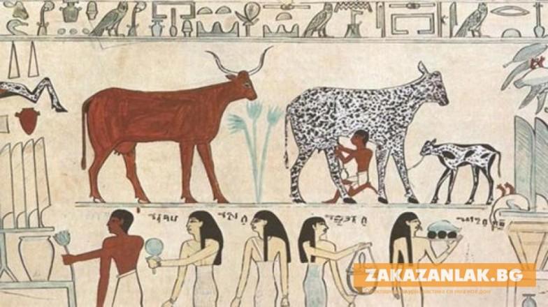 Произвели първото сирене преди 7000 години