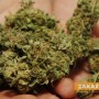 Заловиха двама за притежание на марихуана