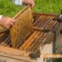 4.7 милиона лева за подкрепа на пчеларите през 2017-а