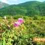 "Неизвестни ""сурвакаха"" земеделец с 6700 розови резници"