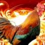 Дойде Огненият Петел, избягвайте червеното