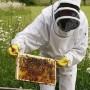 До 1 декември пчеларите могат за кандидатстват за субсидия