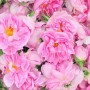 Стяга се Закон за розата