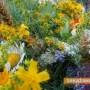 България е на първо място по производство на билки в ЕС