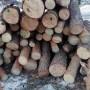 Полицаи и горски откриха незаконни дърва за огрев