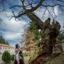 """Дъб на  5 века представя България в конкурса """"Европейско дърво на годината 2020"""""""