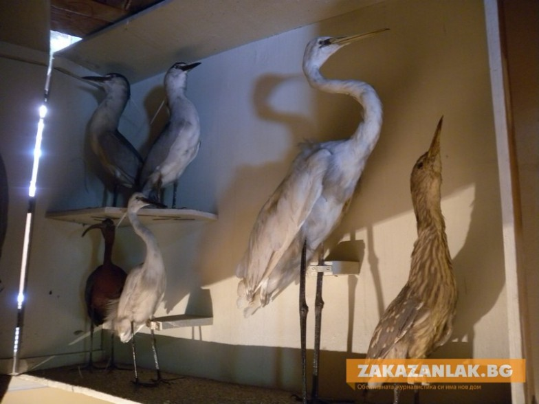 Задържаха търговци на защитени животни