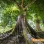 """Започна гласуването за """"Дърво с корен 2016"""""""