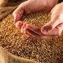 Наблягаме на хляба: Зърното повече и с по-добро качество