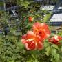 600 лева на година пропуск за Екозоната, 10 лева за увредена роза?