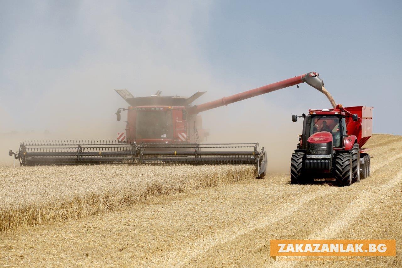 Жътвата започна, навлизат чуждите сортове пшеница