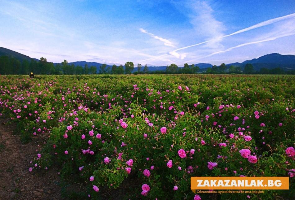 Розопроизводители се събират в Казанлък