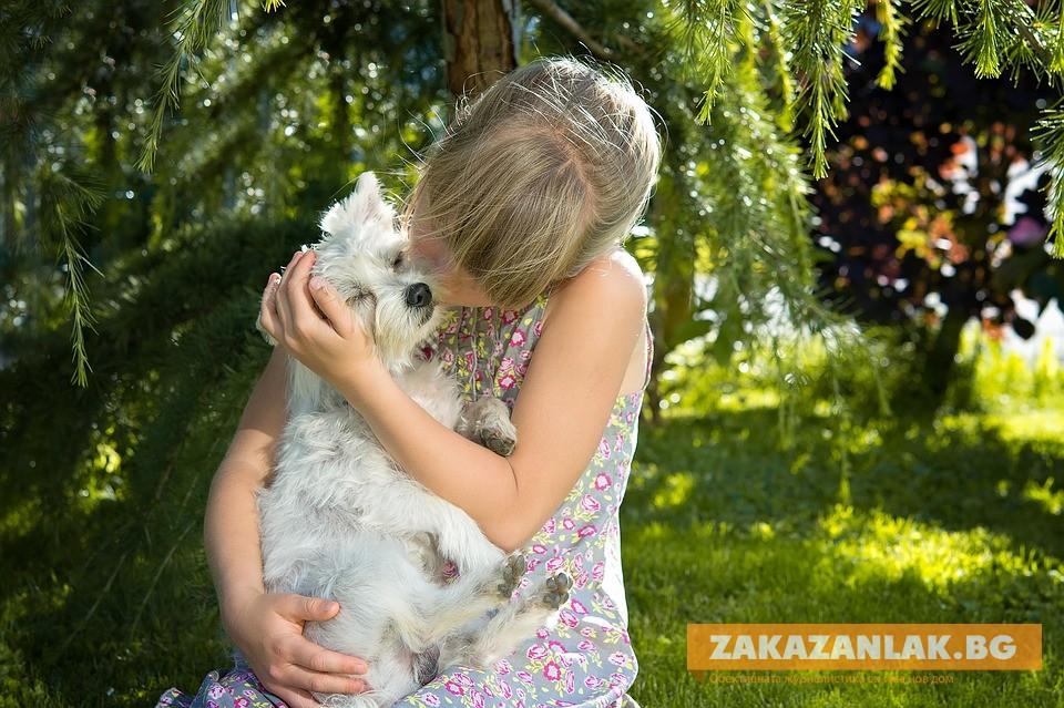 Деца и кучета ще се забавляват заедно