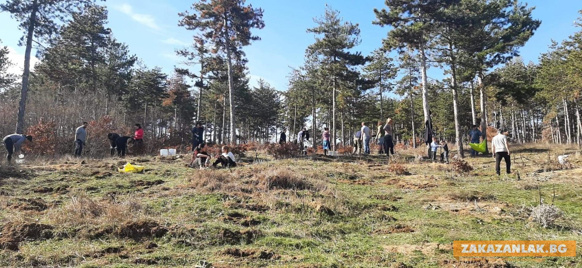 200 дръвчета засади казанлъчанин с приятели